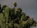 Teotihuacan_Tolantongo-140707-DSC_0447_lowres