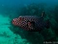 NautilusExplorer-Day1-140625-IMG_0744