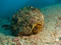 NautilusExplorer-Day1-140625-IMG_0756