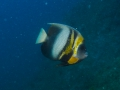 NautilusExplorer-Day1-140625-IMG_0766